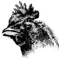 chickens-15-120x120